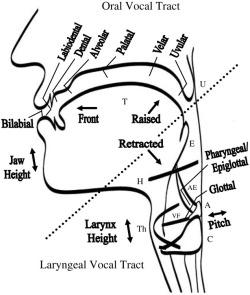 Hard Palate Diagram Molar Diagram wiring diagram ~ ODICIS.ORG