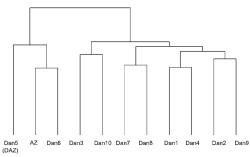 Figure 5. Dendrogram showing the results of a cluster analysis when using only those words that appear in all chunks: the nine 450-word chunks of Daniel and one (ending) chunk of 422 words and the entire 1064-word poem Azarias (AZ). The word boundaries of each chunk are the same as those given in Figure 3.