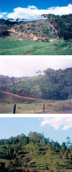 Figure 1. Farmers' implementation of agroecological practices can decrease deforestation and fragmentation, increase connectivity and improve their livelihoods while complying with the Brazilian Forestry Act. Top: Slash and burn practices. Middle: Intervention, forest regeneration, and succession after slash and burn. Bottom: Establishment of silvopastoral rotational grazing systems. Photo Credit: Dr. Abdon Schmitt Filho.