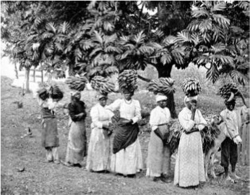 "Fig 2. ""Banana Carriers.""."