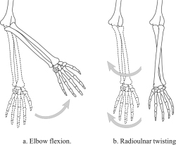 Figure 7. Movements of different joints moving the same mass.