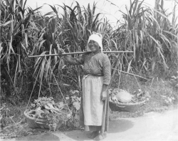 Figure 2. Japanese woman farmer offering vegetables for sale. Waimanalo, O'ahu, ca. 1925.<br/><br/>Photographer Ray Jerome Baker. Courtesy Hawai'i State Archives.