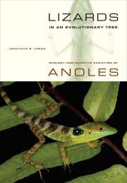 Lizards in an Evolutionary Tree