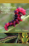 Caterpillars of Eastern North America Cover