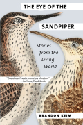 The Eye of the Sandpiper